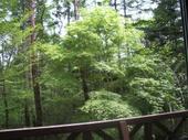 窓越しに見える木々の緑