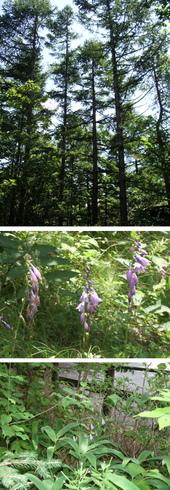 森の中の植物相