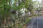 山荘のミツバツツジ